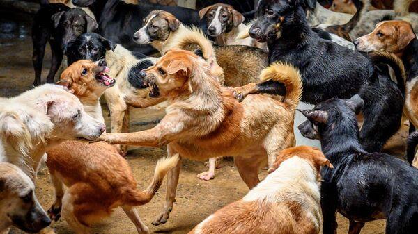 Собачий бой, фото из архива - Sputnik Азербайджан
