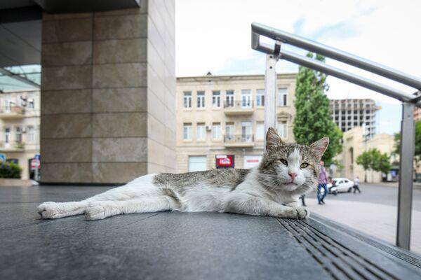 Кот перед входом в одно из станций бакинского метро - Sputnik Азербайджан