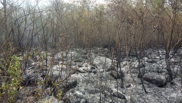 Oğuzda meşə yanğını - Sputnik Азербайджан