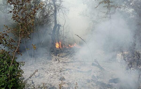 Пожар в предгорных лесах  - Sputnik Азербайджан