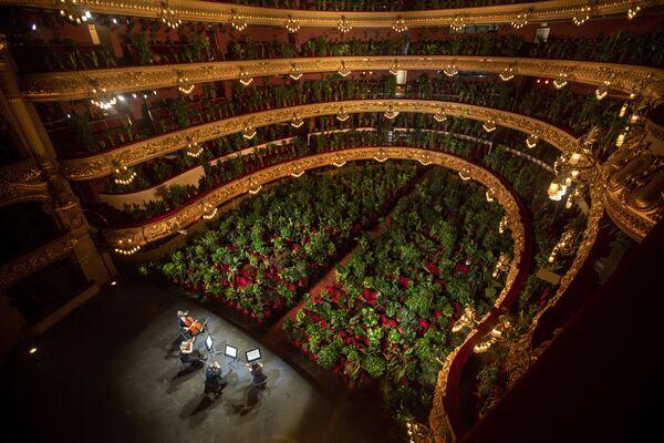 Музыканты репетируют в Gran Teatre del Liceu в Барселоне, где места в зале заняты растениями - Sputnik Азербайджан