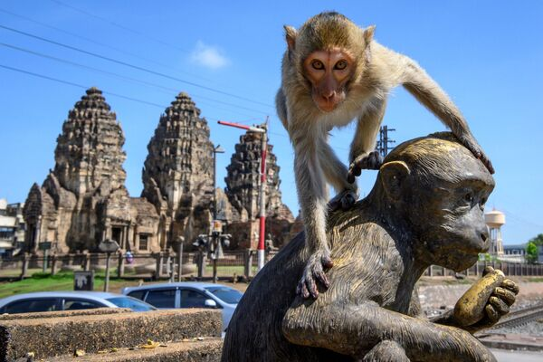 Обезьяна на статуе перед храмом Пранг Сам Йот в Лопбури, Таиланд  - Sputnik Азербайджан