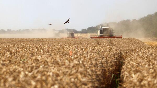 Уборка пшеницы, фото из архива - Sputnik Азербайджан
