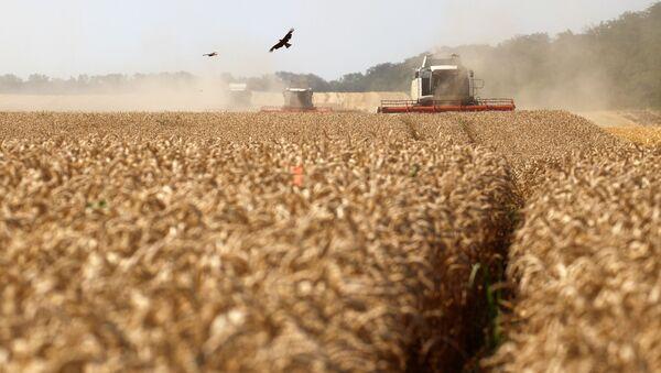 Уборка пшеницы, фото из архива - Sputnik Azərbaycan